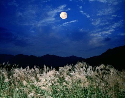 すすきと月