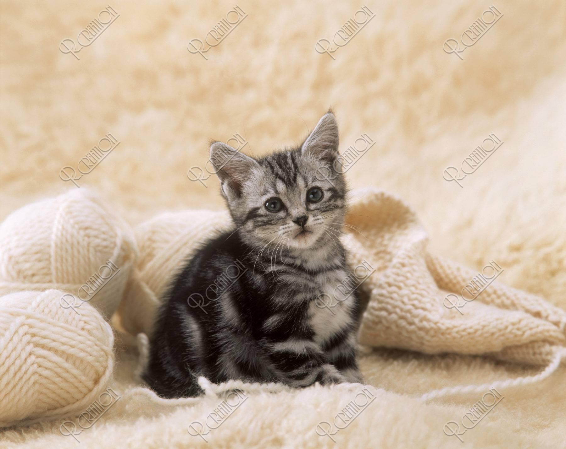 編み物と子猫