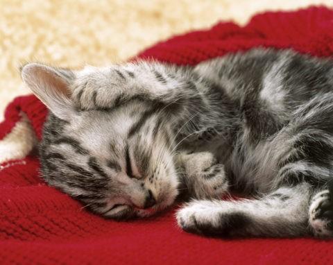 眠っている子猫とセーター