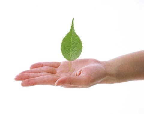手のひらに立つ葉