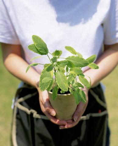 ハーブの鉢植を持つ手