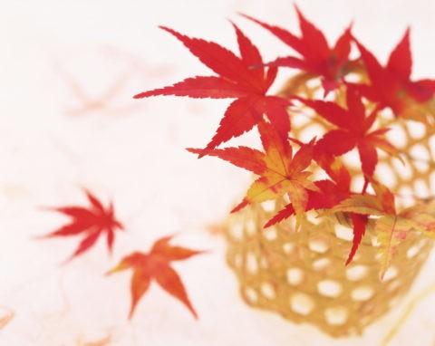 紅葉の枝と篭