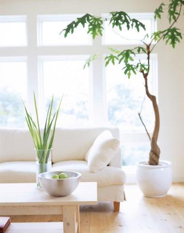 白いソファとグリーン
