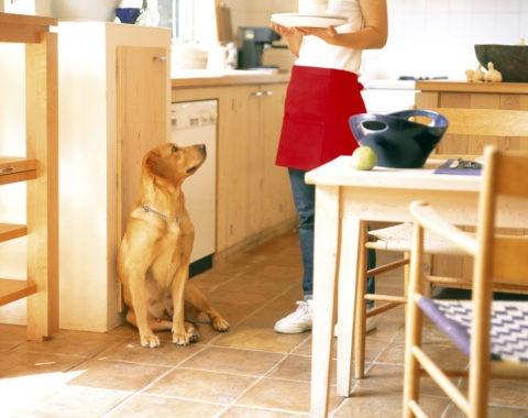 ダイニングキッチンの女性と犬
