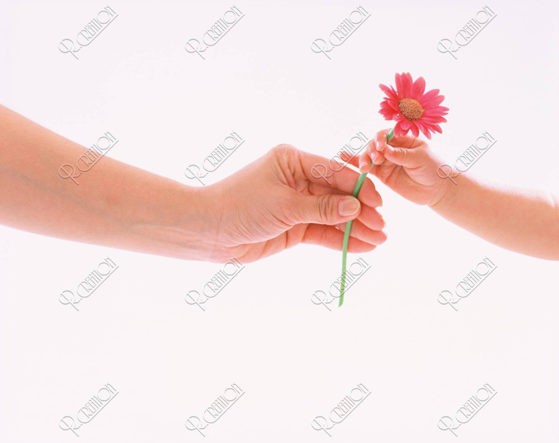 花を渡す母と子の手