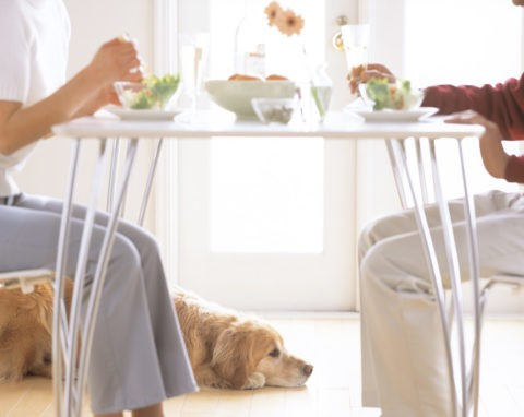 テーブルトップと夫婦と犬