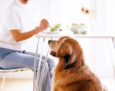 食事をする女性と犬