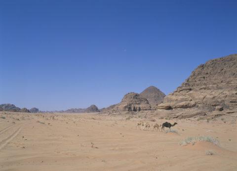 ネフド砂漠とラクダ
