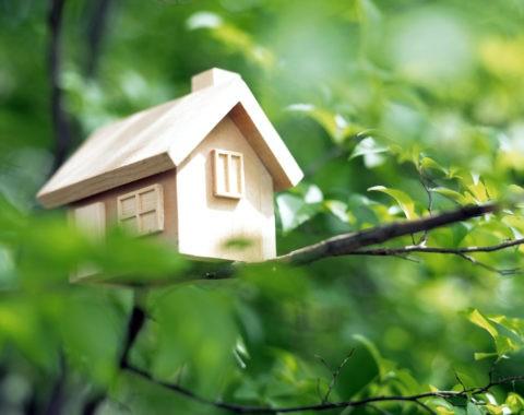 新緑の中の木の家