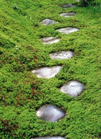 庭の飛び石
