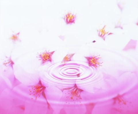 桜と水面の輪