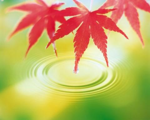 紅葉と水面の輪