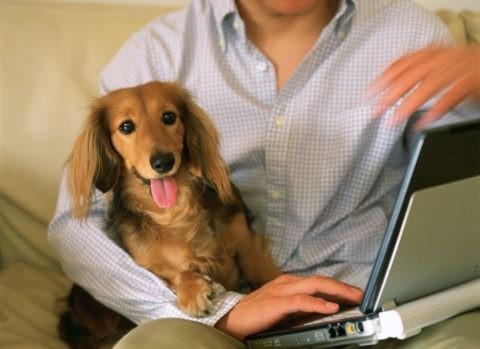 パソコンを見る男性と犬