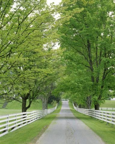 白い柵と新緑の道 N.H.州