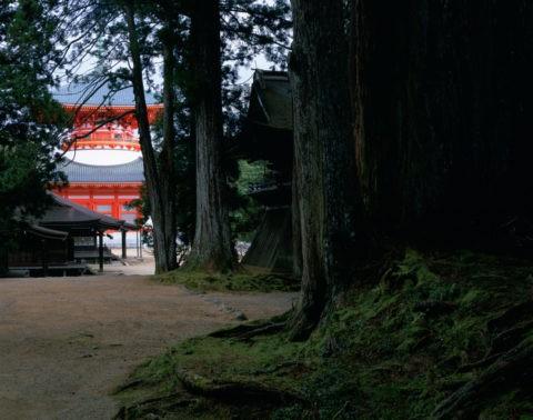 高野山 大塔と杉 W