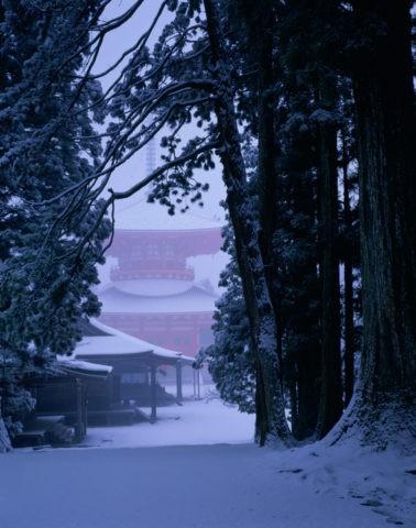 高野山 雪の大塔と杉 W