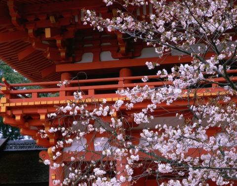 桜と三門 上賀茂神社 W