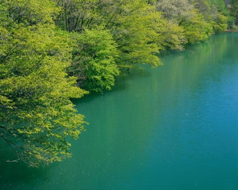 新緑と湖面 錦秋湖