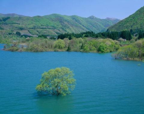 水没林と湖 錦秋湖
