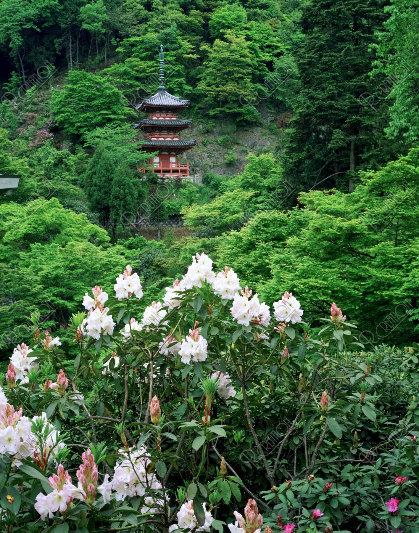三室戸寺三重塔とシャクナゲ