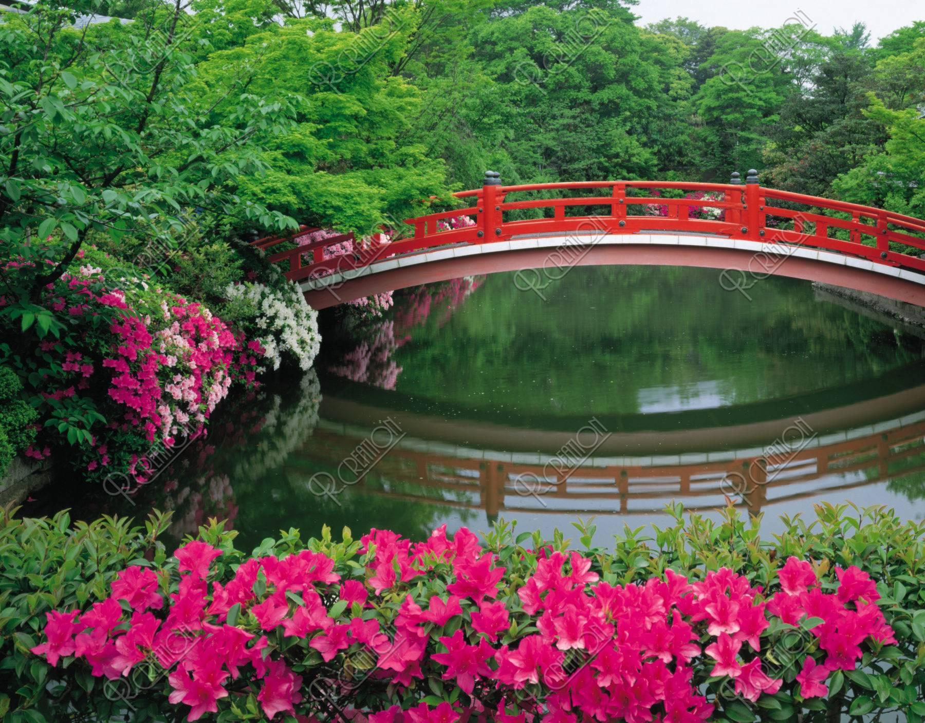つつじと赤い橋