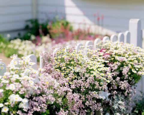 花の飾られた白い柵