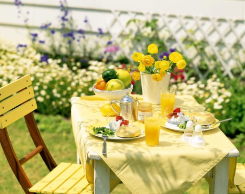 緑の中の朝食のテーブル