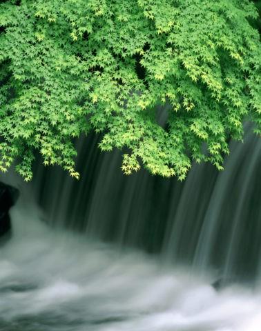 青楓と流れ