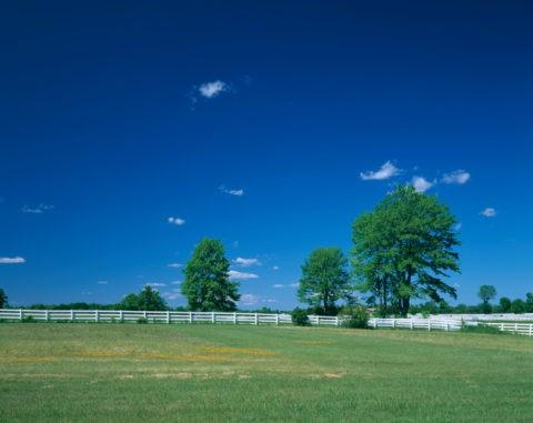 白い柵と樹木