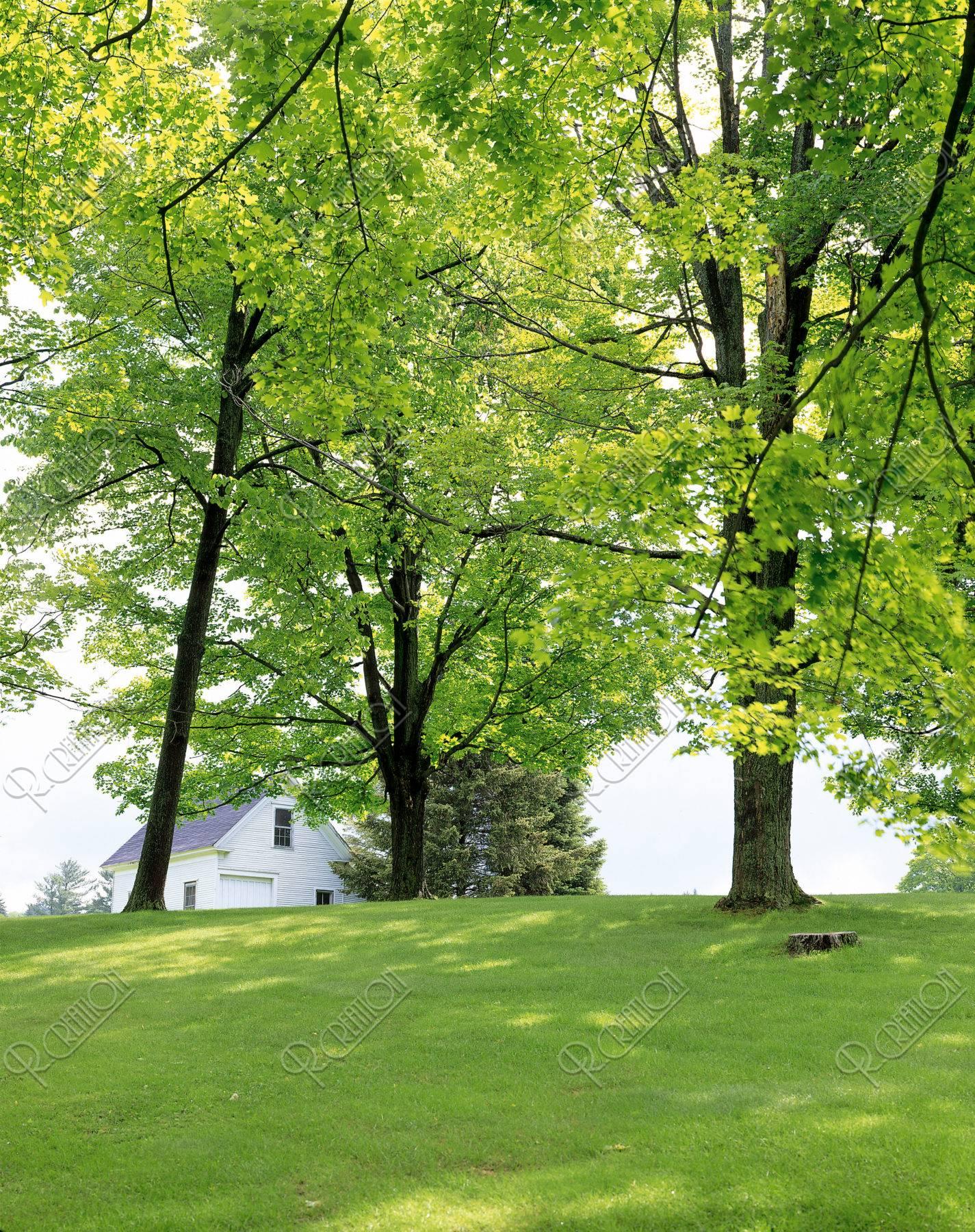 木立の上の家