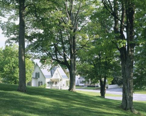 木立の下の家