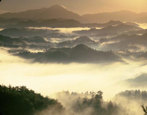 阿騎野の朝霧