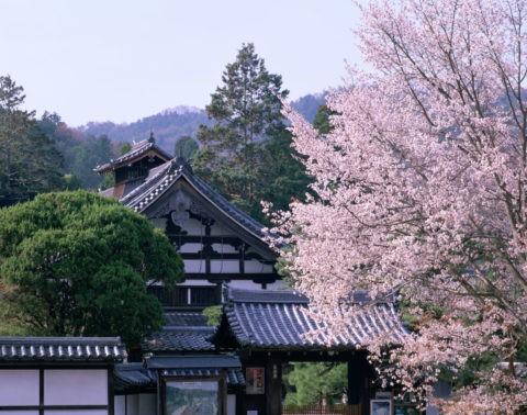 天授庵と桜