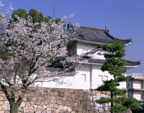 二条城と桜