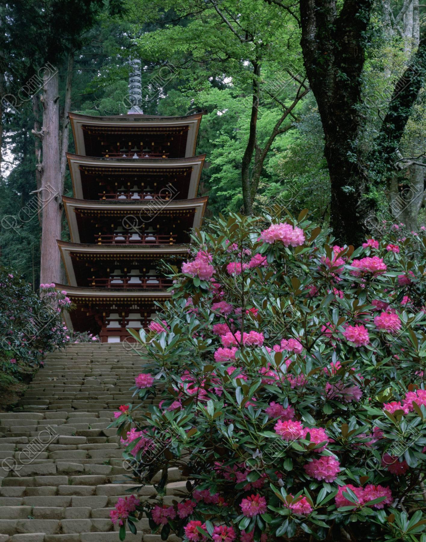 石楠花と室生寺五重塔