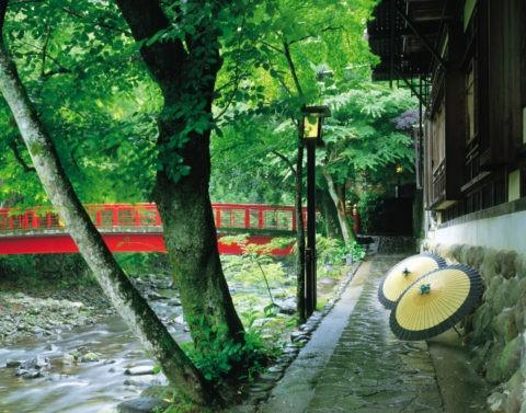 楓の道と番傘