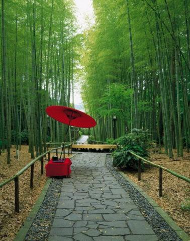 竹の小径と紅傘