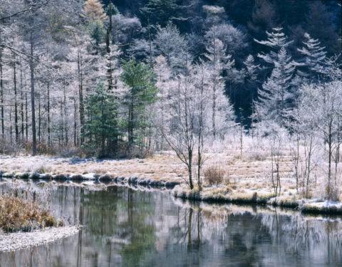 田代池と霧氷