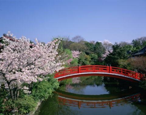 桜咲く神泉苑