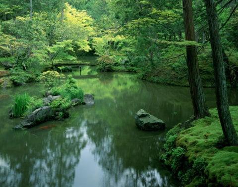西芳寺の庭