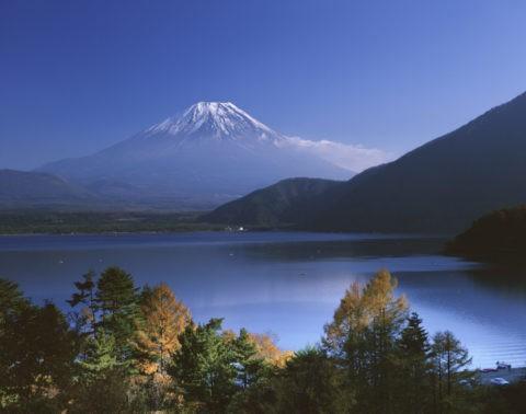 唐松と富士山