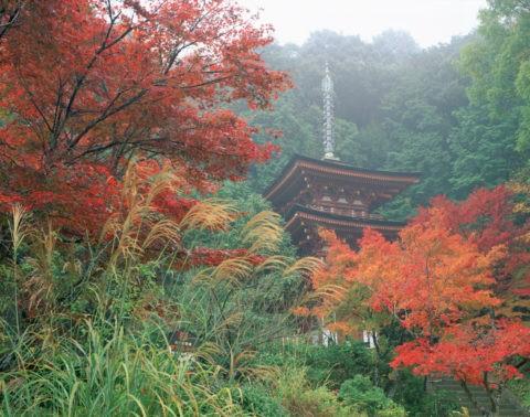 浄瑠璃寺 紅葉