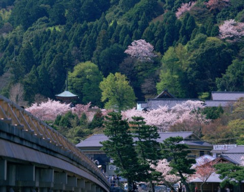 桜と嵐山渡月橋 法輪寺