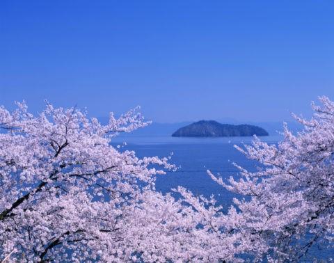 桜と琵琶湖竹生島