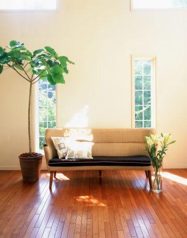 グリーンとソファのある部屋