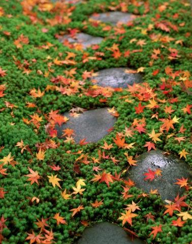 飛石と紅葉