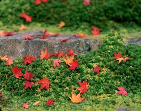 杉苔の石段と紅葉 白龍園