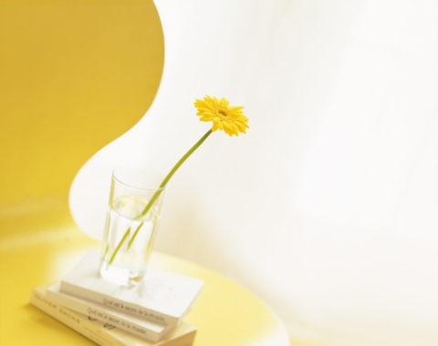 イスの上の黄色いガーベラ