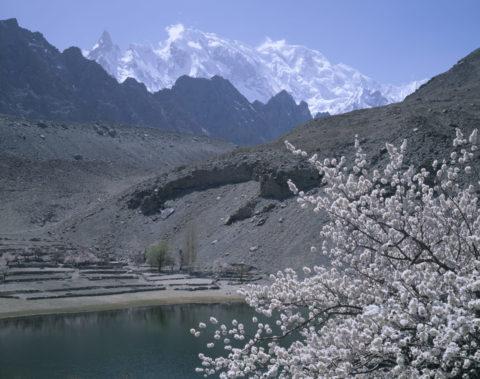 アンズの花とウルタル山グルミット