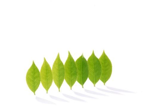 並んで立つ葉
